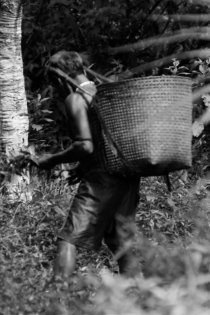colombia indígenas